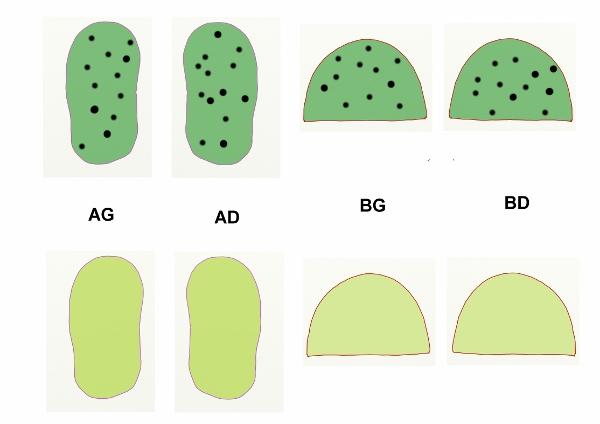 Schema des coupes de tissus chaussons enfant (600x424).jpg