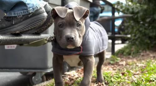 roco-the-dog.jpg