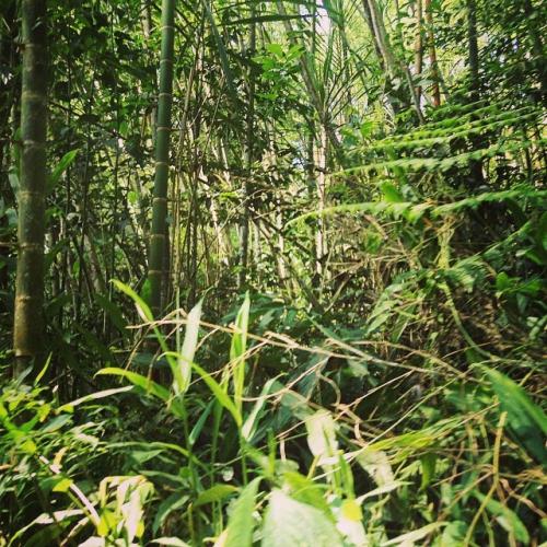 jungle.jpg