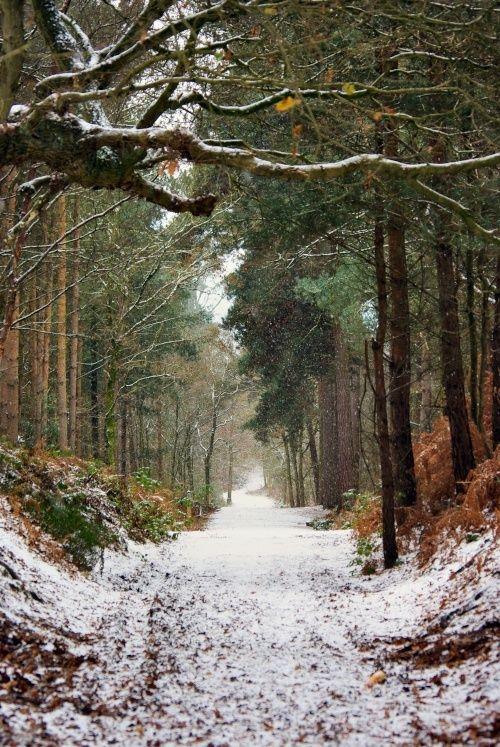 Chemin sous la neige 1.jpg