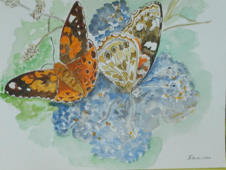 Les deux papillons.JPG