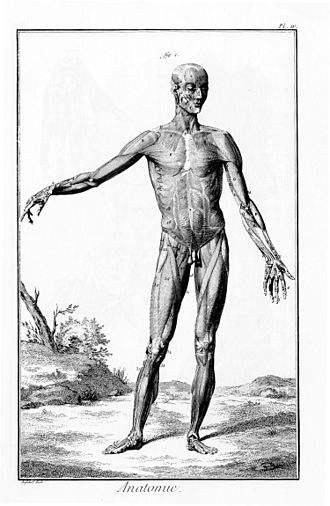 330px-Encyclopédie_de_Diderot_plate_1-143.jpeg