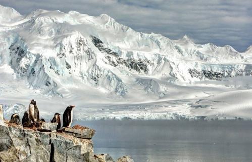 Pingouins-Antarctique.jpeg