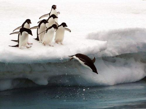 pingouins.jpeg