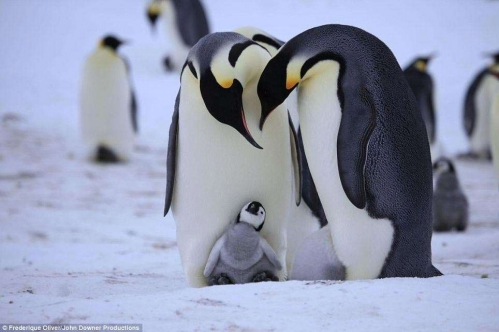 pingouin.jpeg