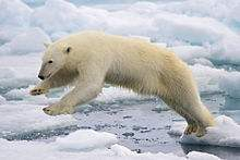 220px-Polar_Bear_AdF.jpeg