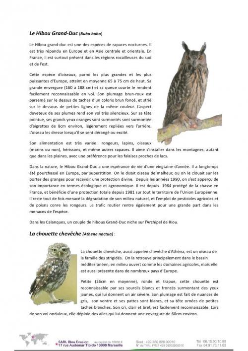 la-faune-et-la-flore-des-calanques-13-728.jpeg