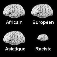 cerveaux.jpeg
