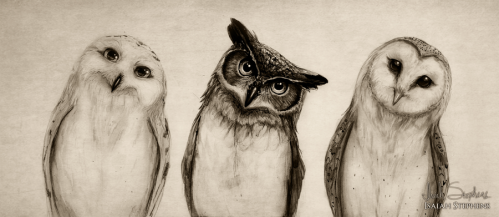 the_owls_three_by_isaiahstephens-d6v29am.png
