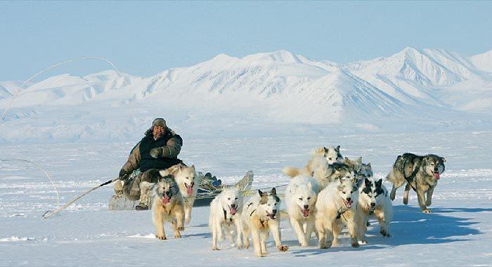 ein-selten-gewordenes-bild-inuit-auf-der-jagd-e5.jpg