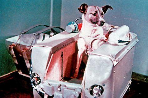 Laika-chien-Union-Soviétique.jpg