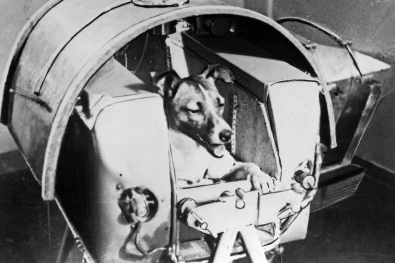 7780344936_le-3-novembre-1957-les-sovietiques-lancent-dans-l-espace-la-petite-chienne-laika-a-bord-de-spoutnik-2.jpg