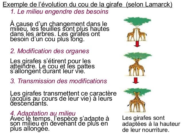 cmc-chapitre-2-lvolution-10-638.jpg