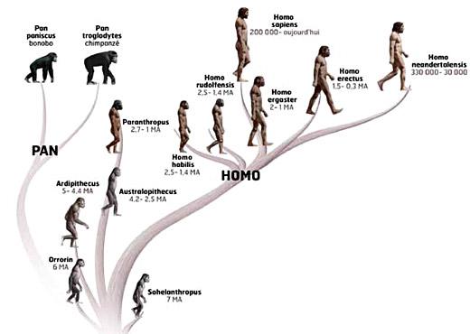 famille-des-hominides.jpg