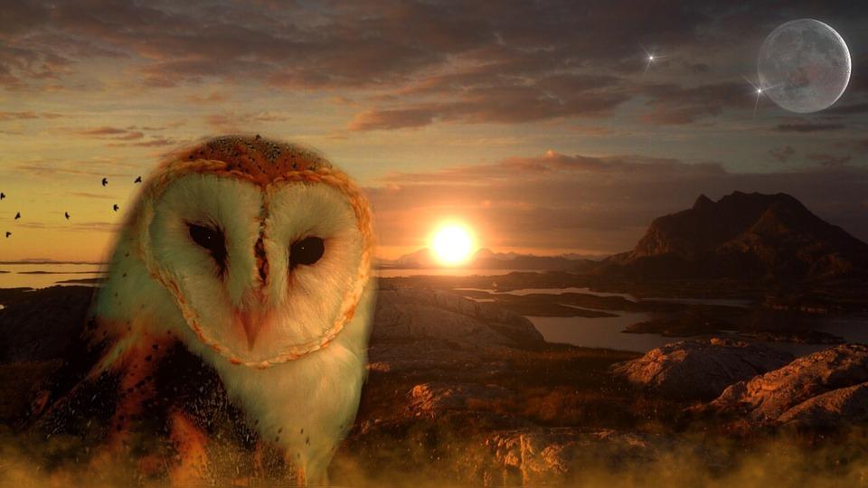 owl-711601_960_720.jpg