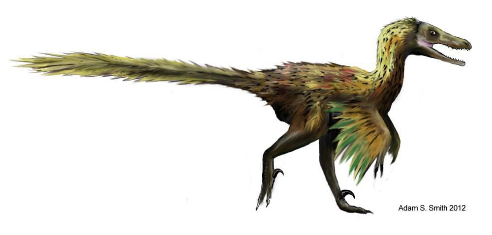 Du Velociraptor 224 La Chouette Club De R 233 Flexion Noctua