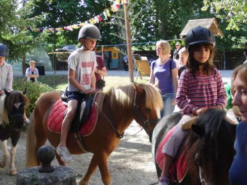 Les poneys dans le parc.jpg