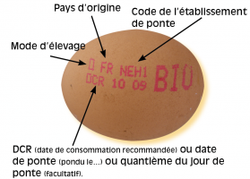 oeuf-20code.png