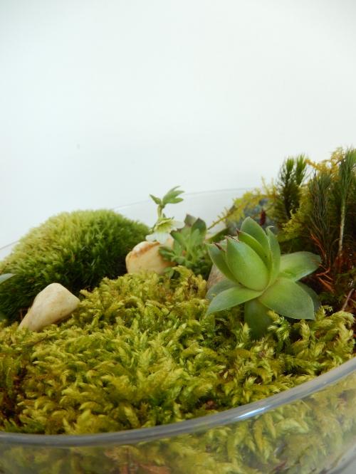 on met des plantes chez soi: petit jardin d'intérieur