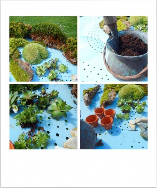 un petit jardin d'intérieuravec de la mousse