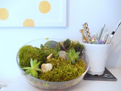 Mon jardin d'intérieur sur mon bureau