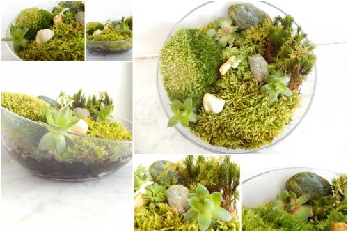 un petit jardin d'intérieur: photo