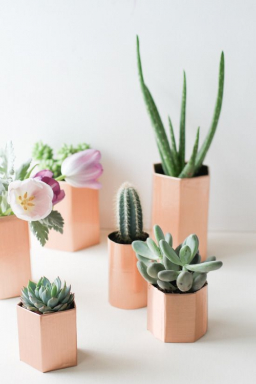Inspiration succulentes en pots