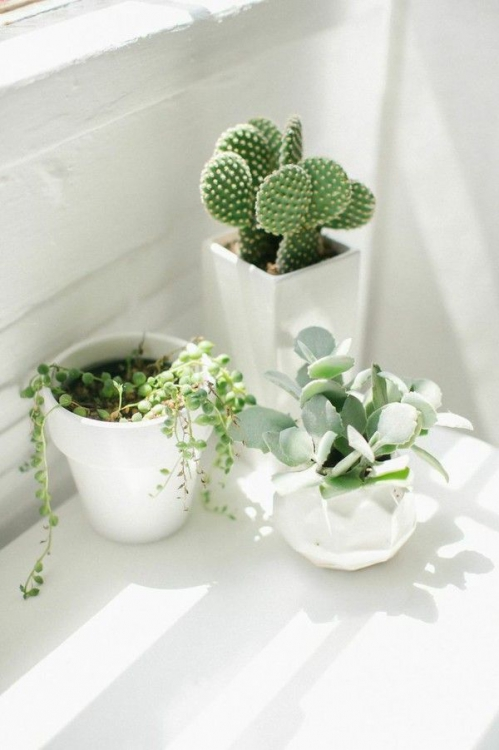 Inspiration succulentes en pots 2