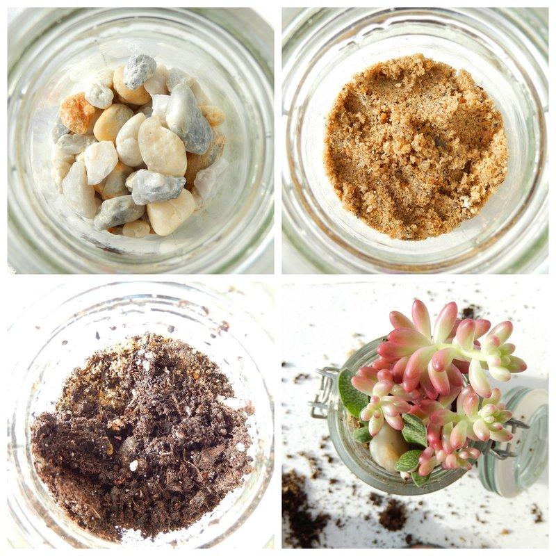 diy terrarium pour succulentes 1