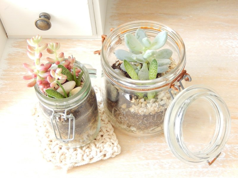 diy terrarium mes succulentes en pots mon carnet d co diy organisation du quotidien. Black Bedroom Furniture Sets. Home Design Ideas
