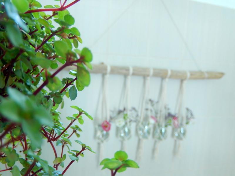 des plantes pour la salle de bain