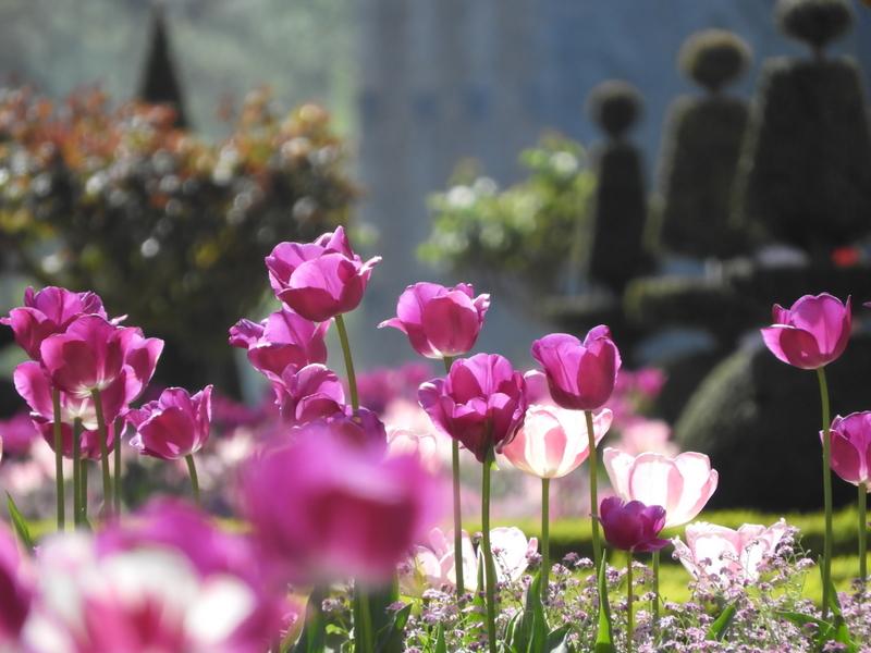 visite touristique : les tulipiades au chateau de maintenon 2