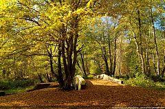 240x159xthumb_automne-haute_vallee_de_chevreuse-56.jpg.pagespeed.ic.oa1IHfAj-M.jpg