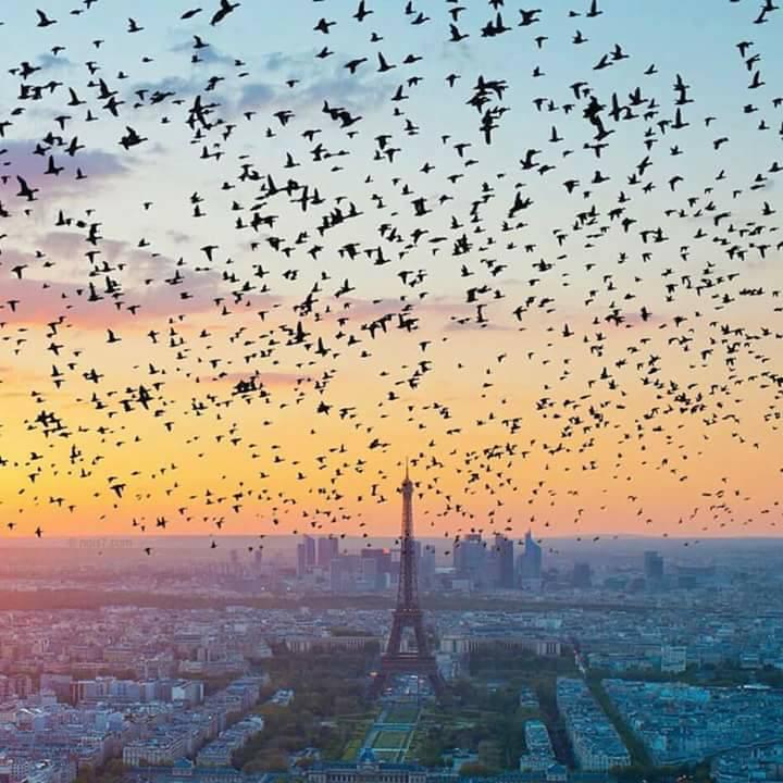 Passaros Paris.jpg