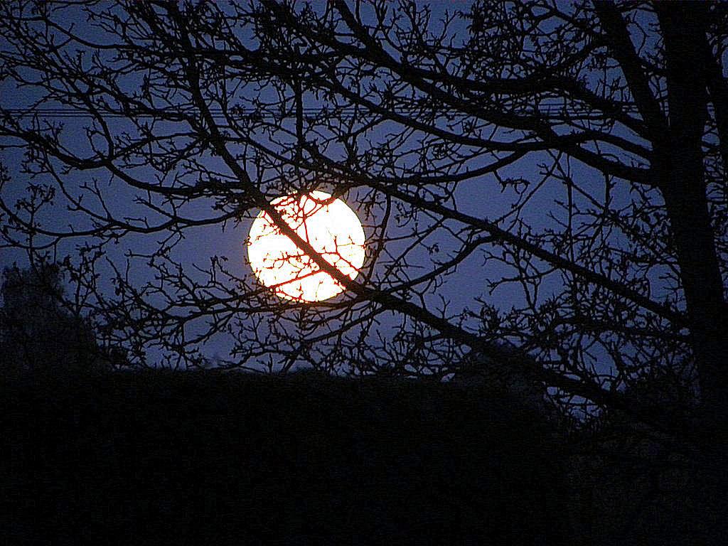 Lune Cigalette.jpg