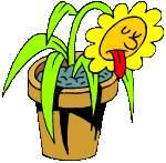 Chaleur_plante.JPG