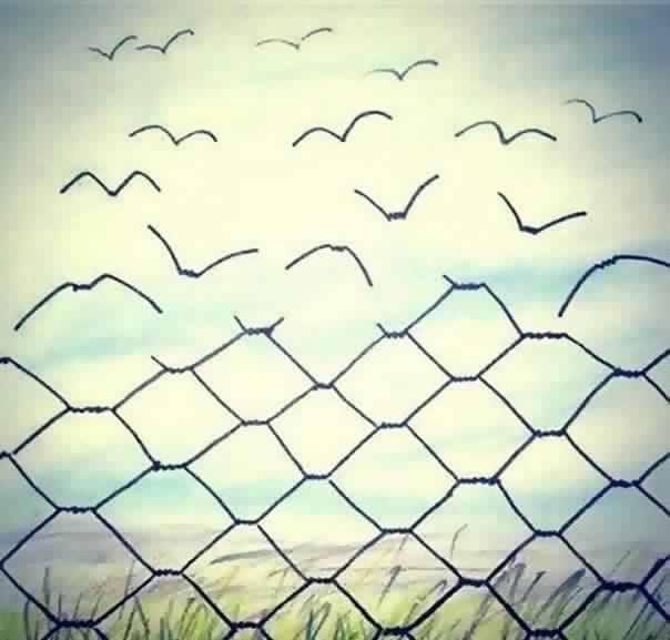 Barbelés oiseaux.jpg