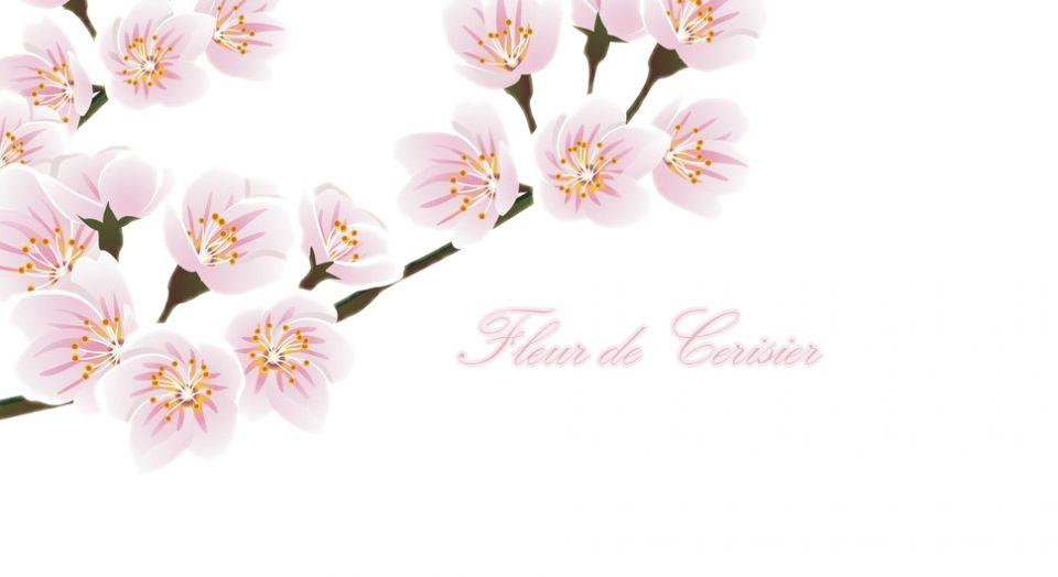 Fleur de cerisier