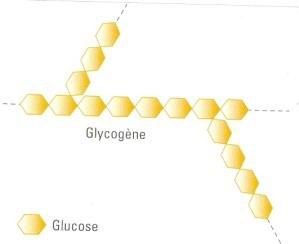 glycogene.jpg