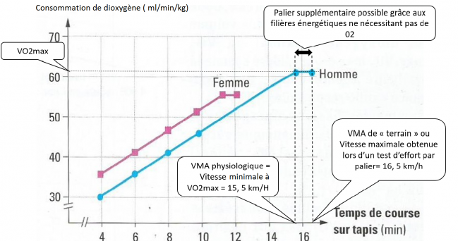 VO2max.png