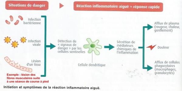 réactioninflammatoire