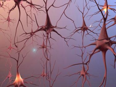 reseauneurone.jpg