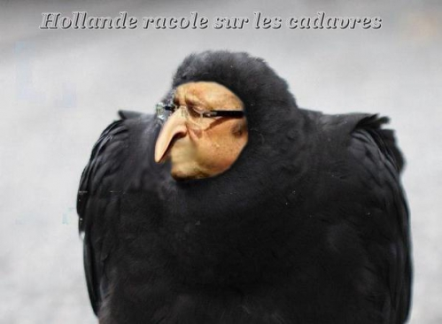 CA4H8ISWgAEsatl  HOllande en corbeau  NUISIBLE.jpg