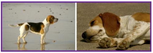Beagle2-1.jpg