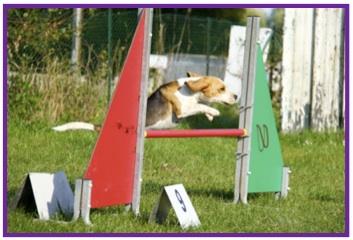 Beagle6-1.jpg
