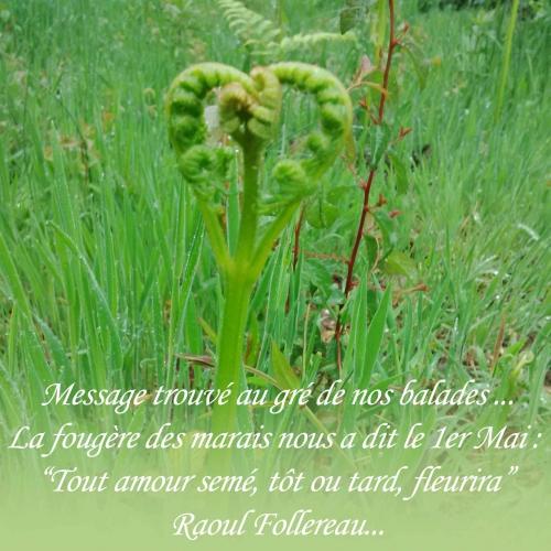 message-du-1er-mai-fougère-de-l'amour.jpg
