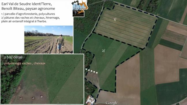 plan vue aérienne prairies et agroforesterie vaches.jpg
