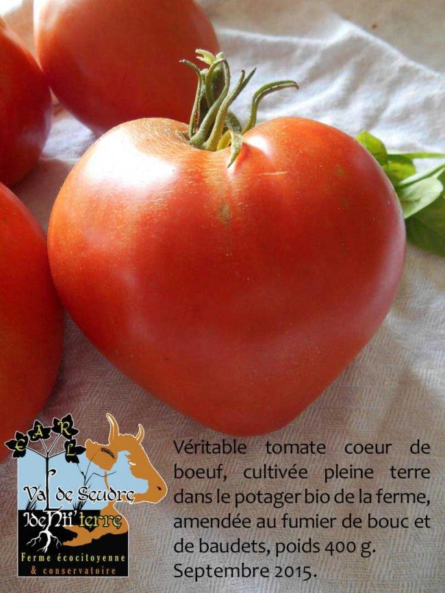 véritable-tomate-coeur-de-boeuf.jpg