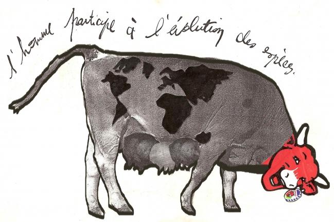 vache folle 2013.jpg