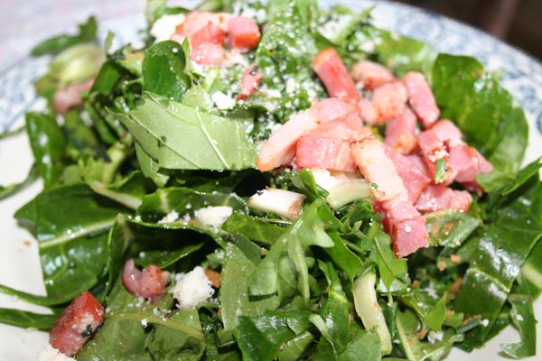 salade de printemps sauvage (4).jpg